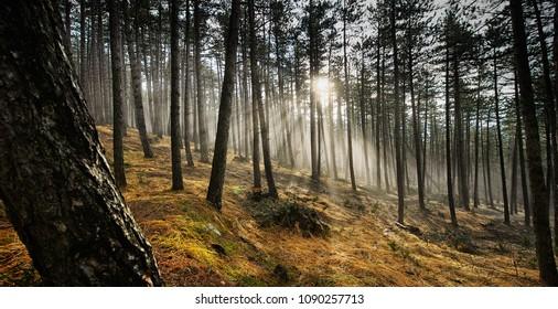 fantastic forest sparavalle