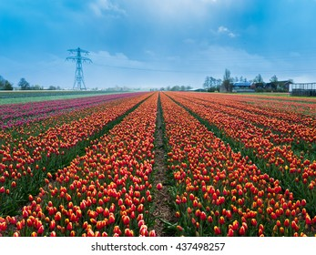 Fantastic landscape with colorful flowers tulips