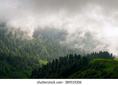 Fantastic landscape of mountain forest in clouds, fog or mist. Russia, Sochi