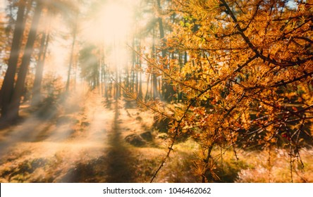 Fantastic Misty Morning at Autumn forest. Scenic landscape in the Alps with majestic yellow trees under sunlit. the fairytale autumn landscape with colorful forest . Beautiful natural background. card
