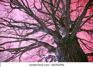 fantastic mystical tree on a purple background