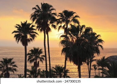 Fantastic ocean sunset with palm trees.