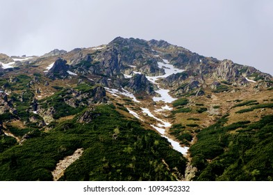 Fantastic and Powerful Mountain summit with green forest - Vysoke Tatry Poland