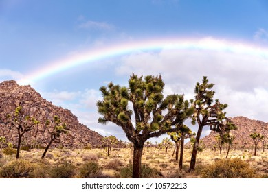 Fantastic rainbow over Joshua trees and mountains in Joshua Tree National park, California, USA.