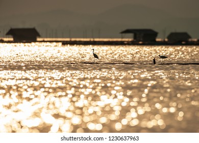 Fantastic scenic lake view, sunset light shines down on the lake, colorful glittering in water. Great Egret standing on the raft, houseboats and mountains backgrounds. Silhouette. Focus on Great Egret