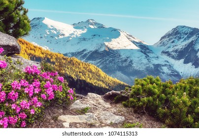 Fantastic spring Mountains landscape. Sunny summer day in mountains valley with rhododendron flowers on the foreground. Wonreful Creative colage at nature. Picturesque unusual scene.