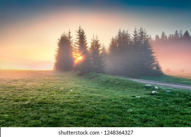 Fantastic summer sunrise in Durmitor Nacionalni Park with old country road. Calm foggy view of Montenegro countryside, Zabljak town location. Beautiful world of Mediterranean countries.