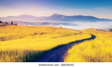Fantastic sunny hills under morning blue sky. Dramatic scenery. Carpathian, Ukraine, Europe. Beauty world.