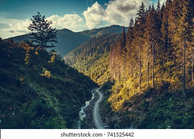 Fantastic sunset landscape with mountain road in pine tree forest. Travel background. Holiday, hiking, sport, recreation. Retro vintage toning effect. Autumn season