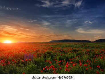 fantastic sunset at the poppies meadow. majestic rural landscape. colorful sky with overcast clouds. picturesque scene. amazing view