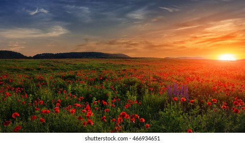 fantastic sunset at the poppies meadow. majestic rural landscape. colorful sky with overcast clouds. picturesque scene. amazing view. small depth of field