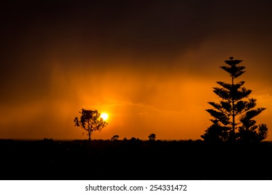 A fantastic sunset with the silhouette of two tree.