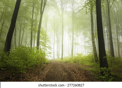 Fantastic trail in misty forest