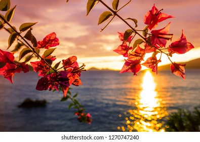 Fantastic tropical sunset in flowers garden