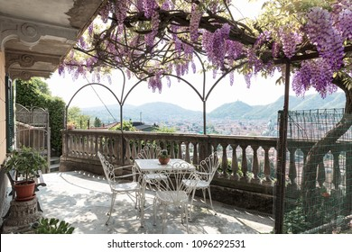 Fantastic veranda covered by colorful wisteria on a beautiful spring day