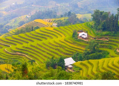 Fantastic view of terraced rice fields in Hoang Su Phi District (Ha Giang Province, Northeast Vietnam).