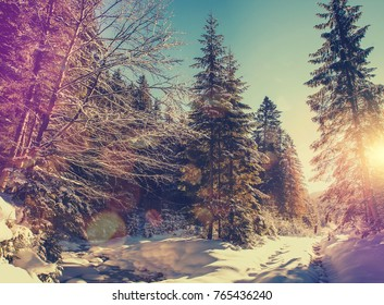 Fantastic winter forest landscape. Icy snowy fir trees glowin in sunlight. winter holiday concept. travel happy day. wonderland in winter. background in postcard. creative artistic image.