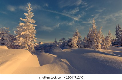 Fantastic winter forest landscape in sunny day. Icy snowy fir trees glowin in sunlight. winter holiday concept. travel day. wonderland in winter. Amazing Nature background. Christmas holyday concept