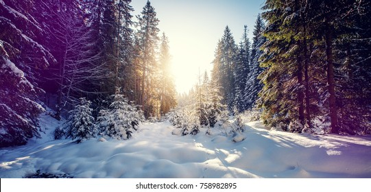 Fantastic winter forest landscape in the sunset. Icy snowy fir trees glowin in sunlight. winter holiday concept. travel day. wonderland in winter.  instagram filter. retro style.  artistic image.