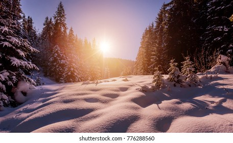 Fantastic winter forest landscape in the sunset. Icy snowy fir trees glowin in sunlight. winter holiday concept. travel day. wonderland in winter. background in postcard. creative artistic image.