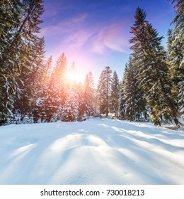 Fantastic winter mountain landscape. overcast colorful clouds, glowing in sunlight. alp trees, of snow covered , under in a warm sunlight. Dramatic wintry scene. Beauty on the world. creative image