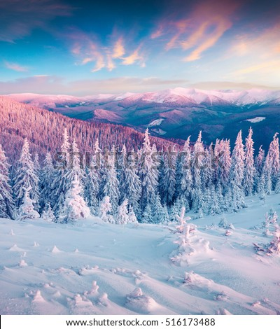 Fantastic Winter Sunrise In Carpathian Mountains With Snow Cowered Trees Colorful Outdoor Scene Happy New Year Cele Tion Concept