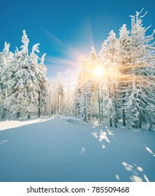 Fantastic winter sunrise in mountain forest with snow covered fir trees. Sunny outdoor scene, Happy New Year celebration concept. Artistic style post processed photo