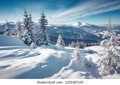 Fantastic Winter Sunset at mountains. Winter scene .Frozen Trees glowing sunlight. Pine forest under sunlit during sunset. Christmas holiday background. Beautiful nature scene. Wintery scenery.