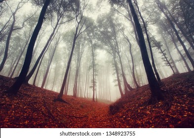 fantasy autumn forest, dramatic woods landscape