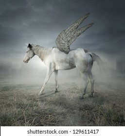 Fantasy of a beautiful white horse with wings representing the legendary Pegaso in the field and dramatic sky in the background