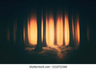 fantasy dark forest with sunlight