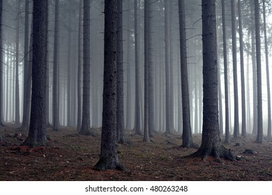 fantasy forest images stock photos vectors shutterstock