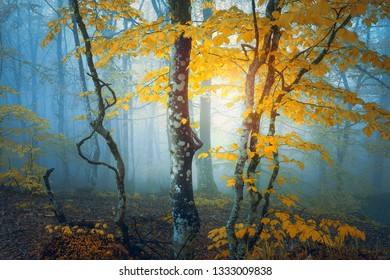 fantasy forest in autumn with yellow leaves