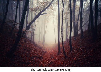 fantasy forest landscape, magical path and trees in fog