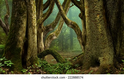 Fantasy forest with mossy crooked  trees