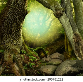 Fantasy forest with old mossy trees, shine and stones