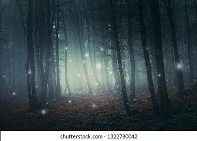 fantasy forest scene with magical sparkles on mysterious path