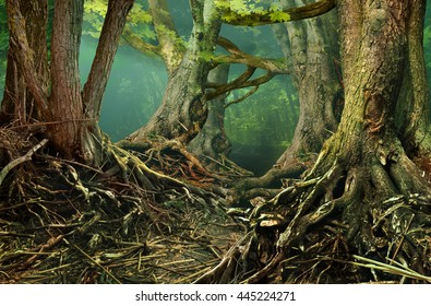 Fantasy forest. Weird trees with crooked roots