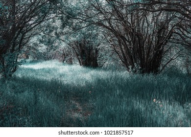 Fantasy landscape of turquoise forest and high grass.