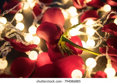 Fantasy Lights Rose Aesthetic Romantic Valentines Stock Photo Edit