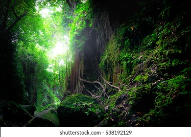 Fantasy mystical tropical mossy forest with amazing jungle plants and flowers. Nature landscape for mysterious background. Indonesia
