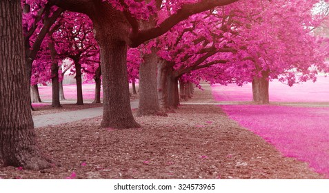 fantasy park with pink colors