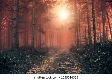 Fantasy red colored foggy forest with mystic sunlight. Color filter effect used.