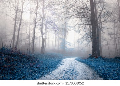 Fantasy saturated foggy forest road. Magic light in the woodland.