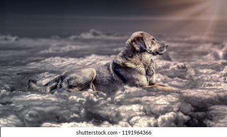 Fantasy scene of one dog laying down on the clouds in the heaven. Warm light shining at dog from the right corner  Photo composition.