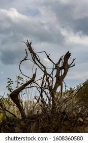 Fantasy tree roots of fallen poplar in the air in cloudy dramatic sky in late autumn day. Colorful image taken at Zlato Pole village, Dimitrovgrad, Haskovo province, Bulgaria. Scenery landscape - Shutterstock ID 1608360580