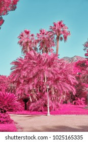 Fantasy tropical landscape with palm trees in pastel tones shot with the help of an infrared filter