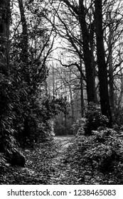Fantasy Woodland Path way In Forest