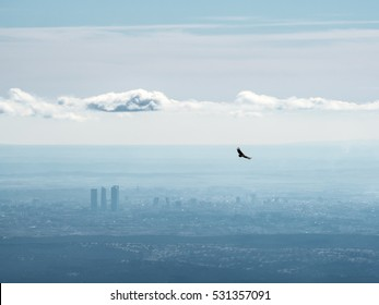 Far aerial view of Madrid city with a vulture flying over it. Concepts of city and nature, wildlife and freedom.