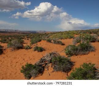 Far Country Arizona